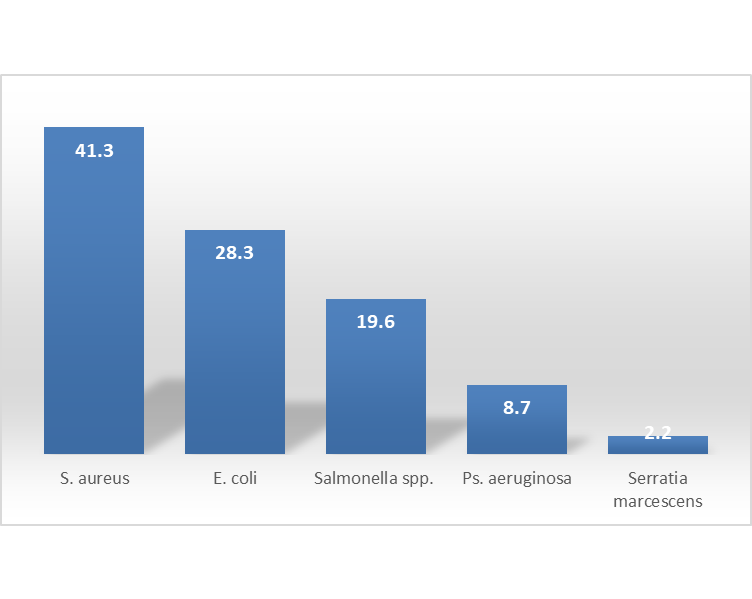 Percentage occurrence of bacterial isolates from cabbage